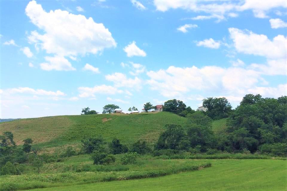 丘の上に建つハートンツリー